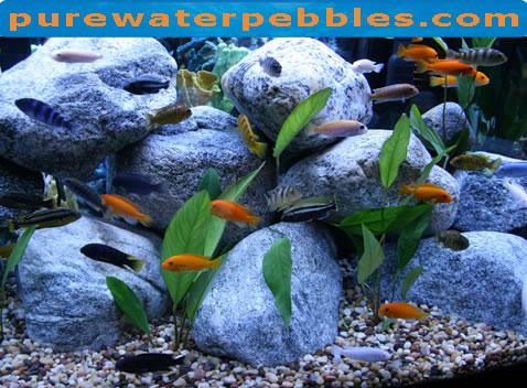 Decor Aquarium Cichlid Ef Bf Bds